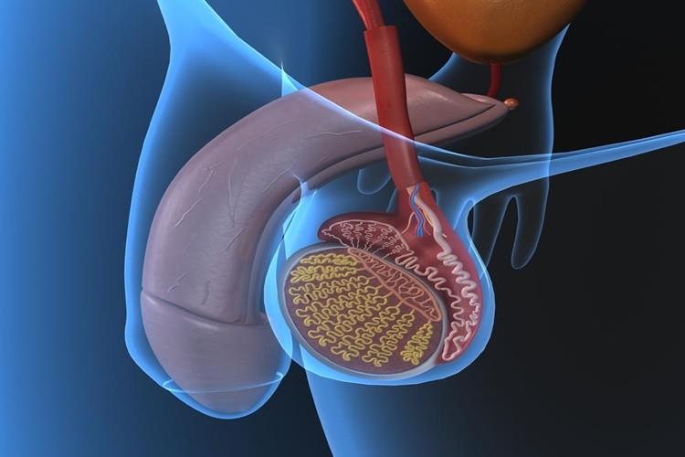 прозрачная сперма простатит