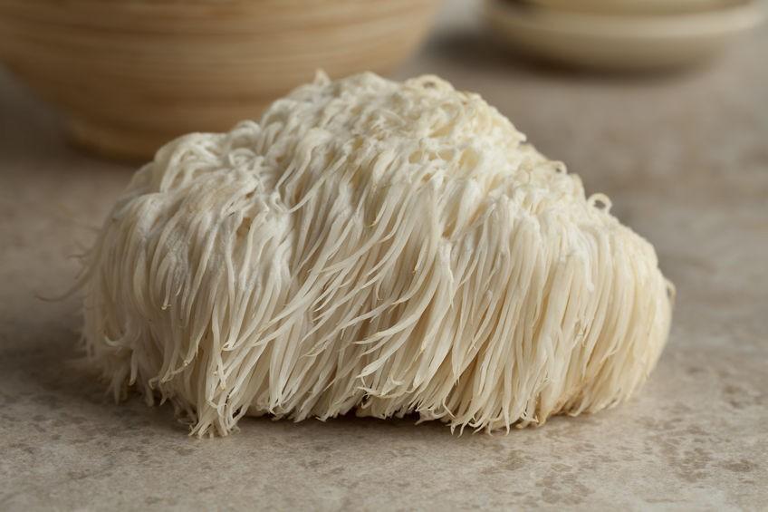 cogumelo juba de leão