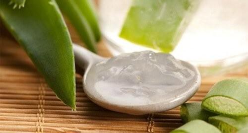 aumentar plaquetas com aloe vera