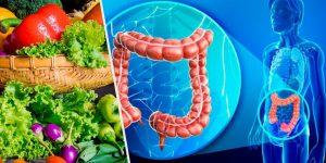 bactérias benéficas no intestino