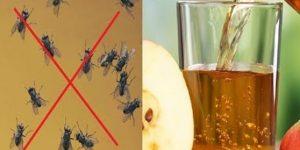 Remédio caseiro para as moscas sumirem