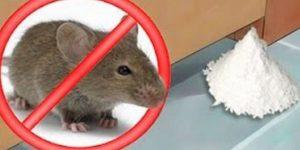 truque caseiro para os ratos desaparecerem
