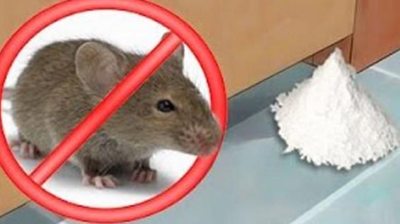 Coloque Isso na Sua Casa e os Ratos Vão Desaparecer em 1 Dia!